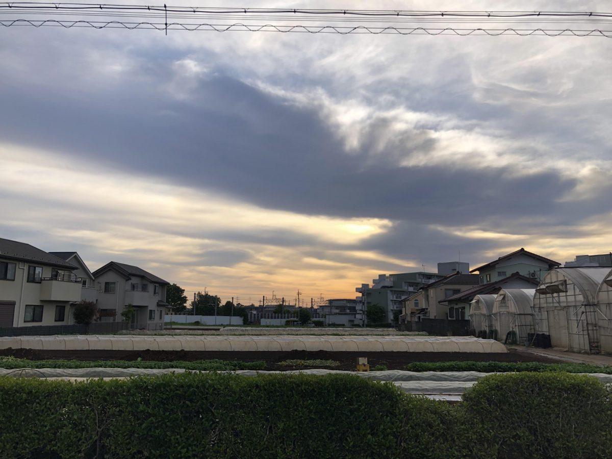 先日、朝一で近所を散歩してきました。空気が気持ちいい!