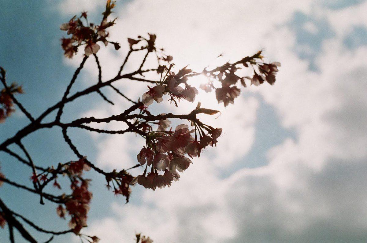 昨年撮った桜の写真。春ももうすぐですね