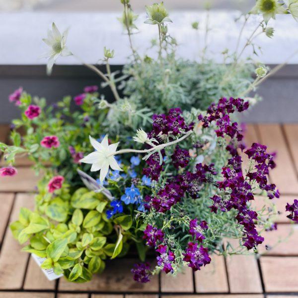 お庭をたのしもう!