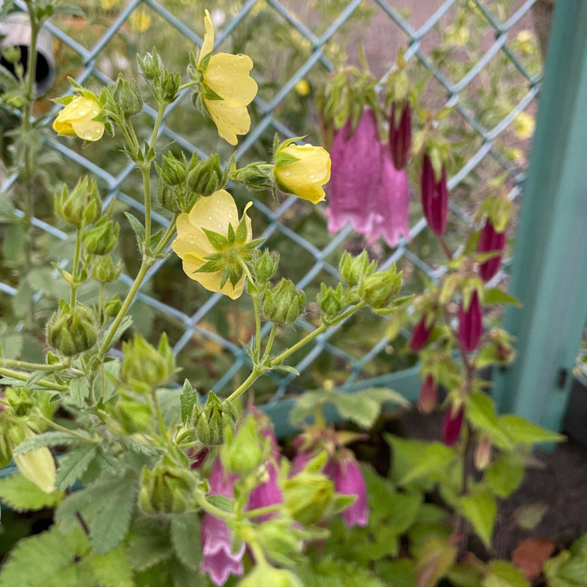 雨上がり、植物たちは嬉しそう!
