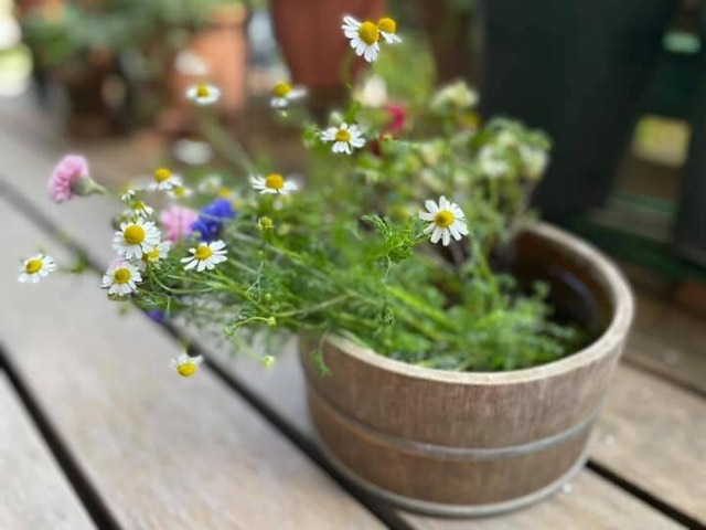 美しいお庭を永く楽しむために