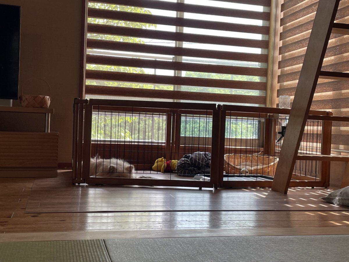 ワンコが昼寝したら私もごろんと畳に…しあわせ、きもちいい