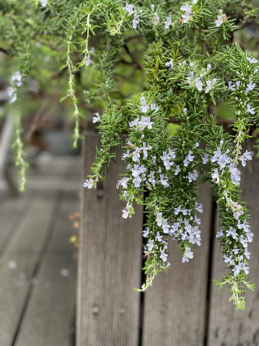 ①お花と水のにおい