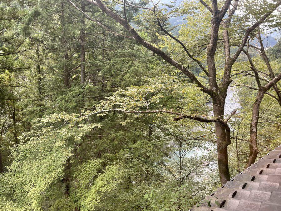 木々深い山あいへ